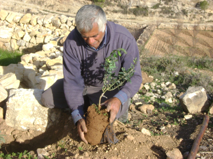 planting tree.png